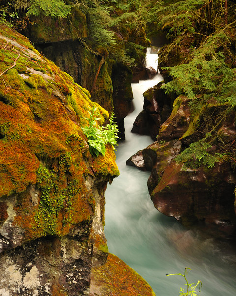 Avalanche Creek, Glacier National Park