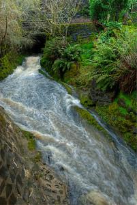 © Joseph Dougherty. All rights reserved.   A small rain-swollen creek at Tilden Botanical Garden in Wildcat Canyon in the Berkeley hills.