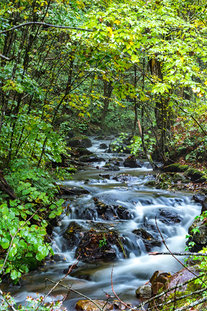 creek and waterfall in the forest