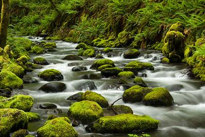 Gorton's Mossy Creek