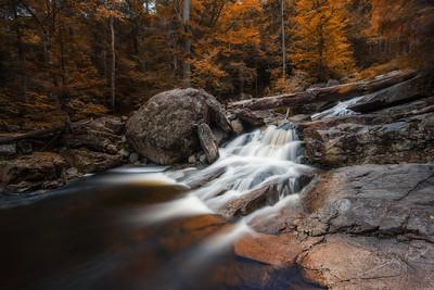 Faux Autumn In The White Mountains