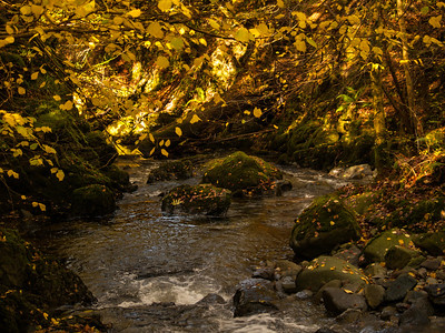 Golden Stock Ghyll