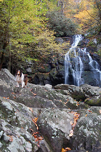 Darby at Spruce Flats Falls, Great Smoky Mountains National Park, Tennessee
