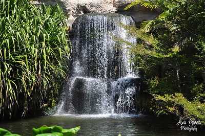 Waterfall at Jungle Island