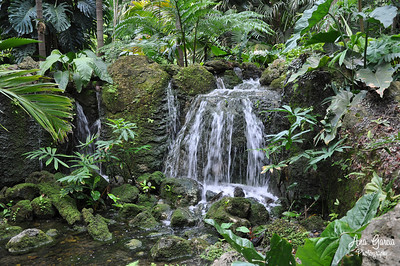 Waterfall at Fairchild Tropical Botanic Garden
