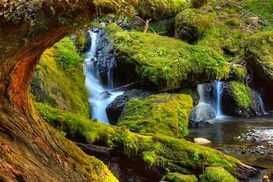 Cascading Gorton Creek