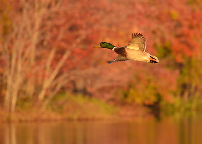 Autumn Dusk