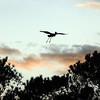 Heron on the Horizon