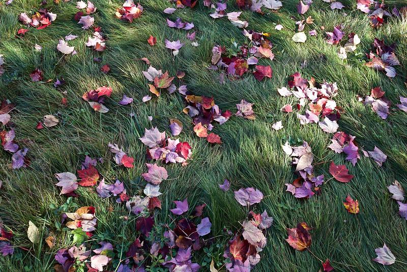 Leaves like jewels on autumn grass.