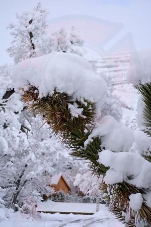 Snow Cap Joshua