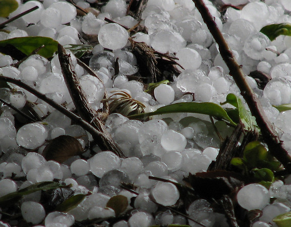 A close-up of sizable hail covering the ground after a February thunderstorm