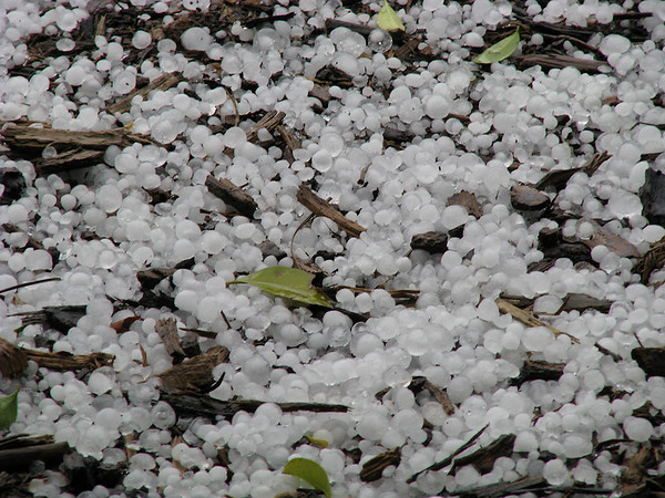 The ground covered in sizable hail from a February thunderstorm