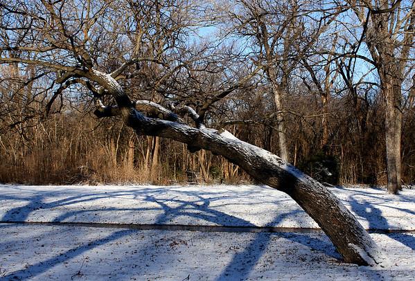 A snowy scene (2009_12_25_046696)