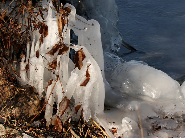 Onshore ice formations draped over shoreline plants at White Rock Lake in Dallas (2010_01_10_047926)