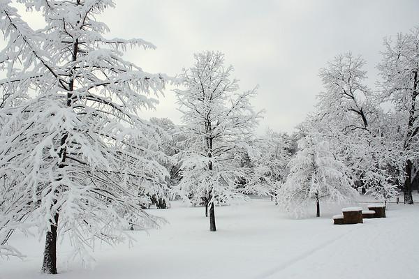 A snowy scene (2010_02_12_049787)