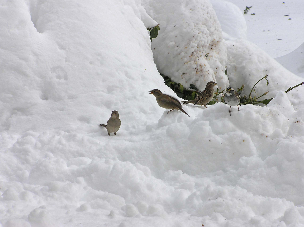 That one sparrow is saying  WTF #*+#%.