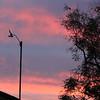 Reddish clouds around anemometer