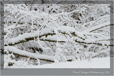 2012_01_18_SnowStorm-3052