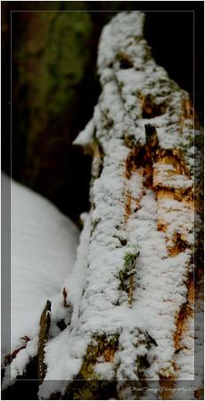 2012_01_18_SnowStorm-2991