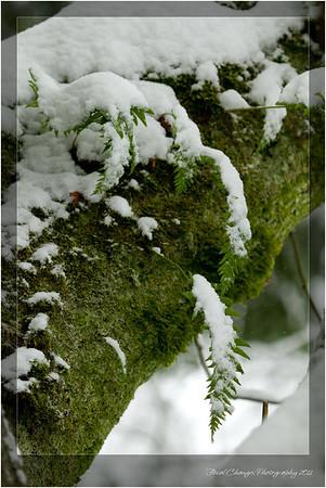 2012_01_18_SnowStorm-2992