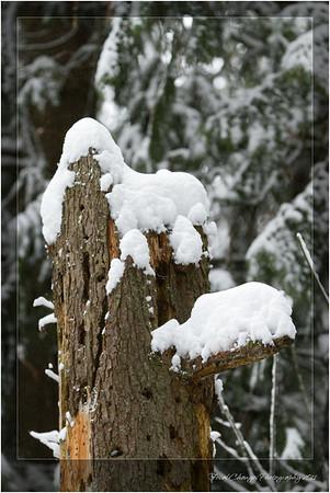 2012_01_18_SnowStorm-3084