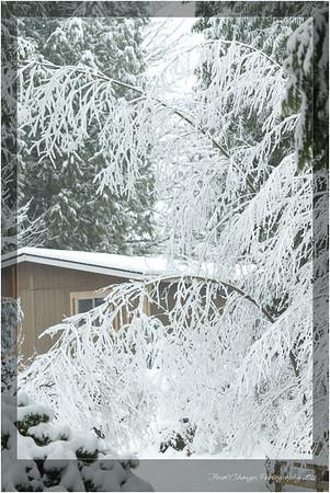 2012_01_18_SnowStorm-2988