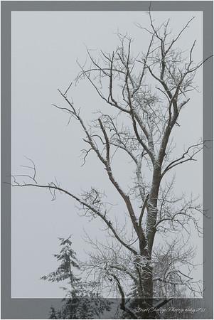 2012_01_18_SnowStorm-3035