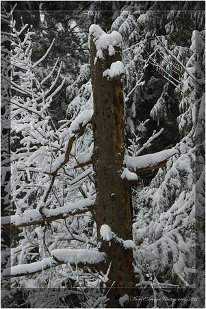 2012_01_18_SnowStorm-3015
