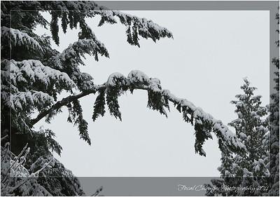 2012_01_18_SnowStorm-3072