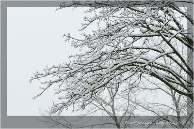 2012_01_18_SnowStorm-3051
