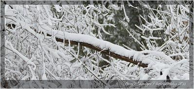2012_01_18_SnowStorm-3048
