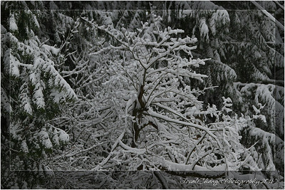 2012_01_18_SnowStorm-3013