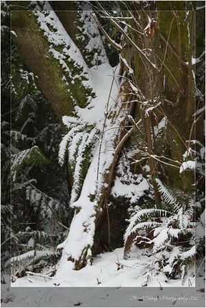 2012_01_18_SnowStorm-3062