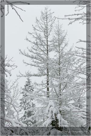 2012_01_18_SnowStorm-3025