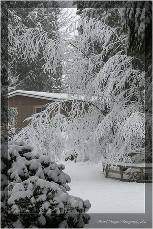 2012_01_18_SnowStorm-3019