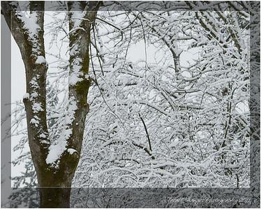 2012_01_18_SnowStorm-3066