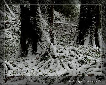 2012_01_18_SnowStorm-3017