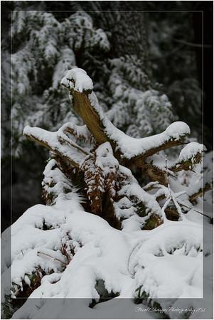 2012_01_18_SnowStorm-3080