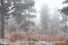 Foggy Days : foggy morning in Colorado Springs