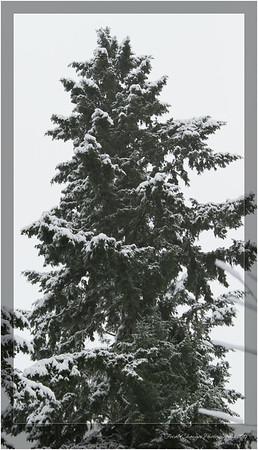2012_01_18_SnowStorm-3055