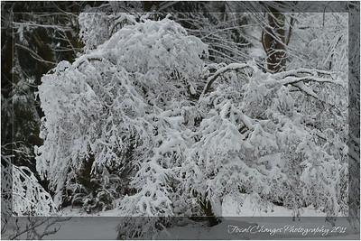 2012_01_18_SnowStorm-3075