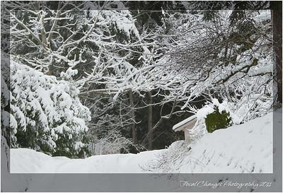2012_01_18_SnowStorm-3061