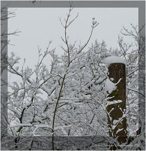2012_01_18_SnowStorm-3037
