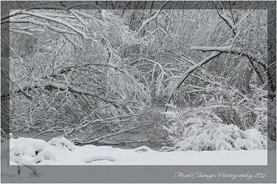 2012_01_18_SnowStorm-3020