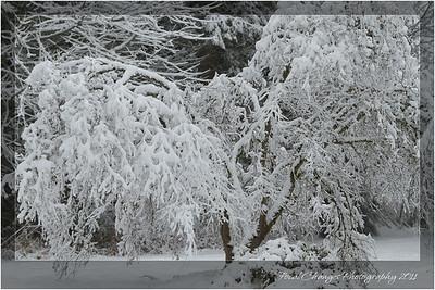 2012_01_18_SnowStorm-3023