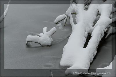 2012_01_18_SnowStorm-3029