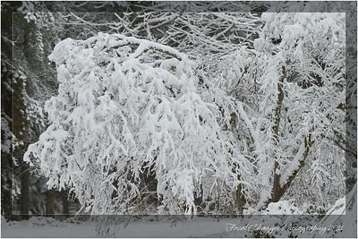2012_01_18_SnowStorm-3024
