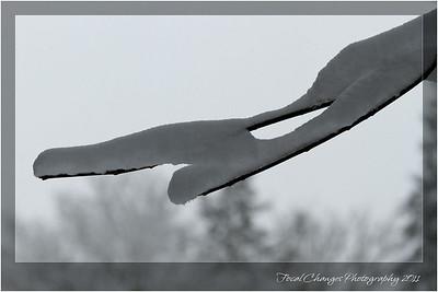 2012_01_18_SnowStorm-3018