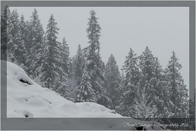 2012_01_18_SnowStorm-3008