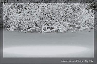 2012_01_18_SnowStorm-3028